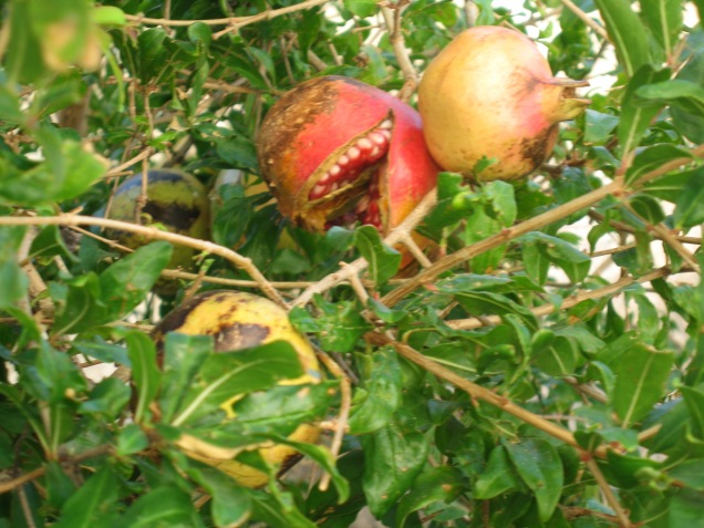 Carnivorous Fruit