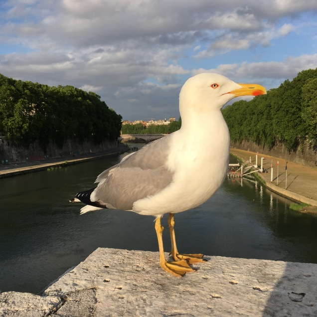 Seagull Friend
