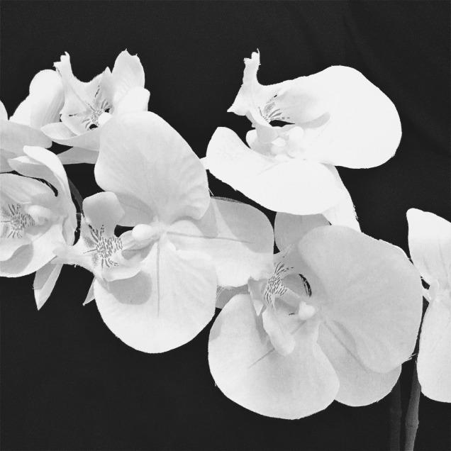flowers_bw