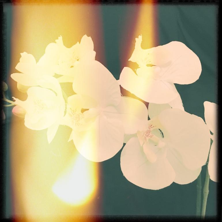 flowers_rays